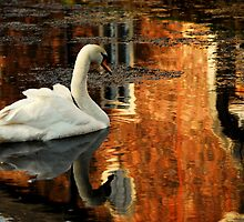 """""""REFLECTIONS IN THE MOAT"""" by snapitnc"""