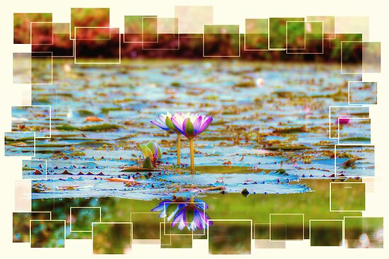 Water Lily Reflections by nixworries