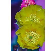 Pair of Prickly Pear Cactus Flowers Photographic Print