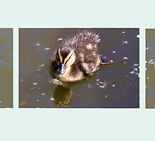 Three Little Ducklings by lynn carter