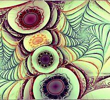 Spider's Web by Benedikt Amrhein