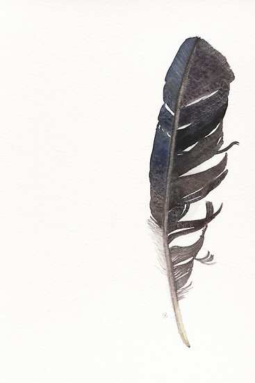 how to clean crows feathers