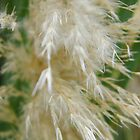 Pampas Grass by WildestArt