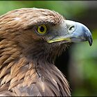 Golden Eagle by alan tunnicliffe