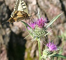 Butterfly and Thistle by taiche