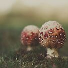 Toadstools by Paisleypatches