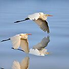 Great Egret Reflections by Kathy Baccari