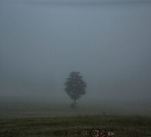 In the Mist by Cynthia Broomfield