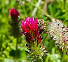 Sweet Nectar by Tisha Clinkenbeard