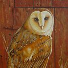 Barn Owl (close up) by Lana Wynne