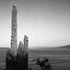 Saguaro at Lake Roosevelt by James2001