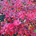 Flora Autumn by kahoutek24
