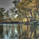 River Red Gums by Adam Burke