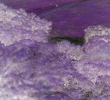 Lavender by night by Antionette