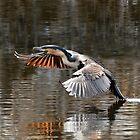 Landing!! by Macky