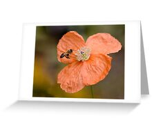 Bee and Bloom Greeting Card