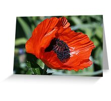 Pop Goes the Poppy Greeting Card
