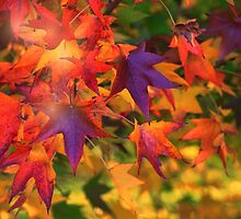 Autumn's Flaming by Jill Fisher