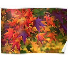 Autumn's Flaming Poster