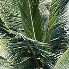 Palm - Palma by PtoVallartaMex