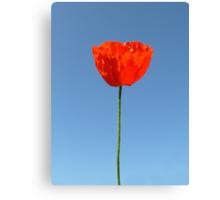 Poppy in the Sky Canvas Print