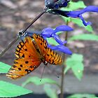 Butterfly Hanging Upside Down by Cynthia48