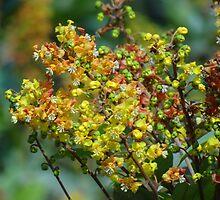 Jungle's Blossoms - Flores De La Selva by Bernhard Matejka