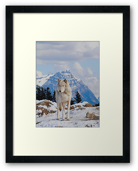 White Grey Wolf & Rocky Mountains Art  by Skye Ryan-Evans