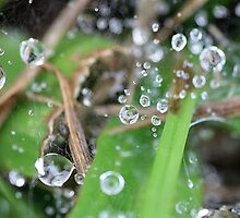 Drops of reflection by cathywillett