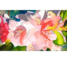 Rhododendron in Peach Photographic Print