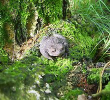 Common toad by alaskaman53