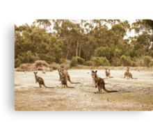 what's everybody looking at? Canvas Print