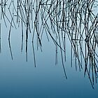 Blue Reeds by amko