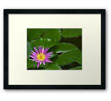 Purple Waterlily Framed Print