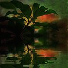 Flower sunset & Waterhole~ by Virginian Photography (Judy)