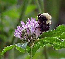 Busy busy buzz buzz by vigor