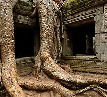 Ta Prohm Angkor Wat Cambodia by Bob Christopher