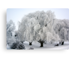 Winter's Frosted Willow  Canvas Print
