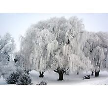 Winter's Frosted Willow  Photographic Print