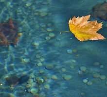 Leaf In Water by robertsscholes