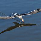Skimming Along by Kathy Baccari