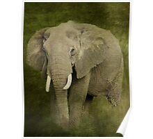 Elephant Spirit Poster