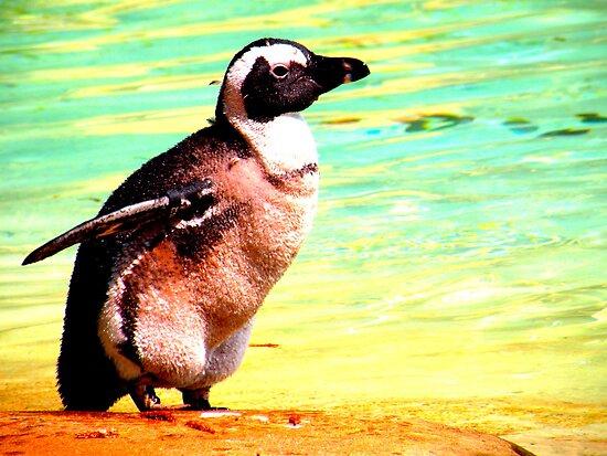 Penguin by Barnbk02