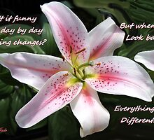 Stargazer Lily with a Question by SummerJade