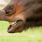 """""""Don't Look A Gift Horse In The Mouth"""" - NZ by AndreaEL"""