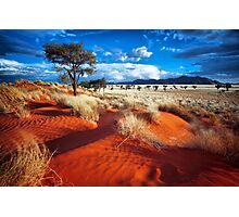 Dancing Grasses on the Red, Red Earth Photographic Print