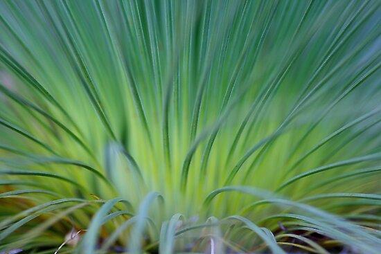 Soft Grass Tree  by Carole-Anne