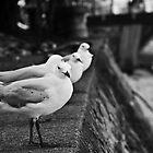 Menacing Gulls by WarwickG