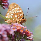 prettyness by katpartridge