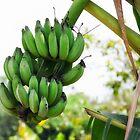 Vietnam: Bananas by Kasia-D